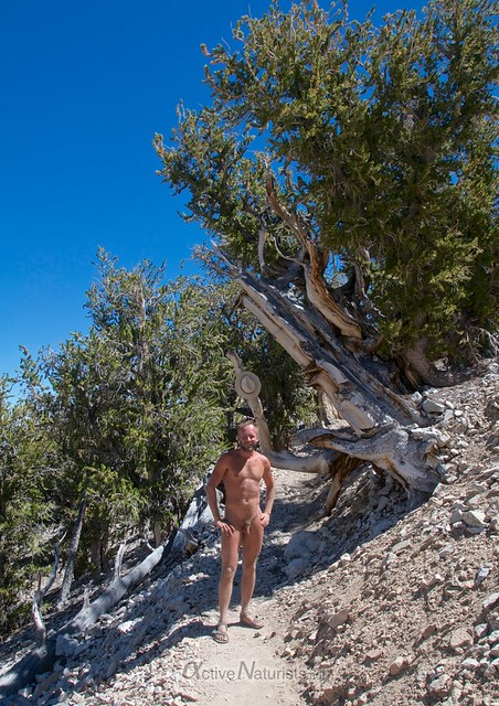 naturist 0001 Ancient Bristlecone Pine Forest, California, USA
