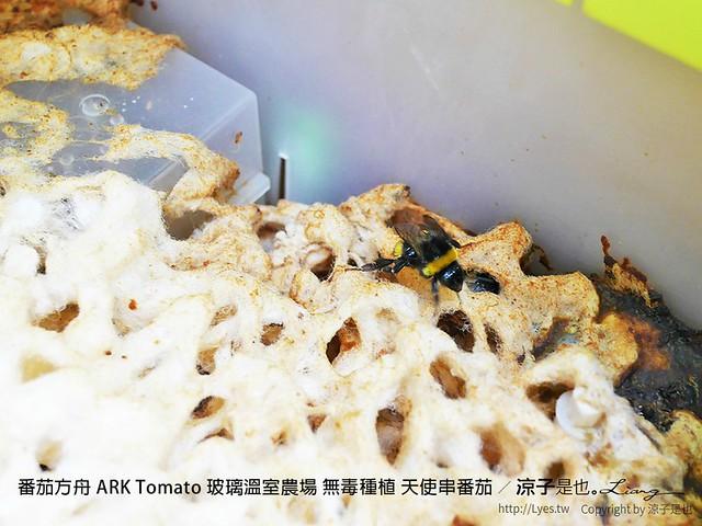 番茄方舟 ARK Tomato 玻璃溫室農場 無毒種植 天使串番茄 10