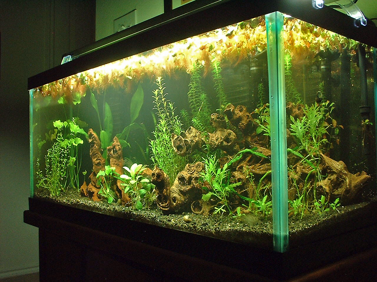 30 gallon planted aquarium a photo on flickriver for Floating plants for betta fish