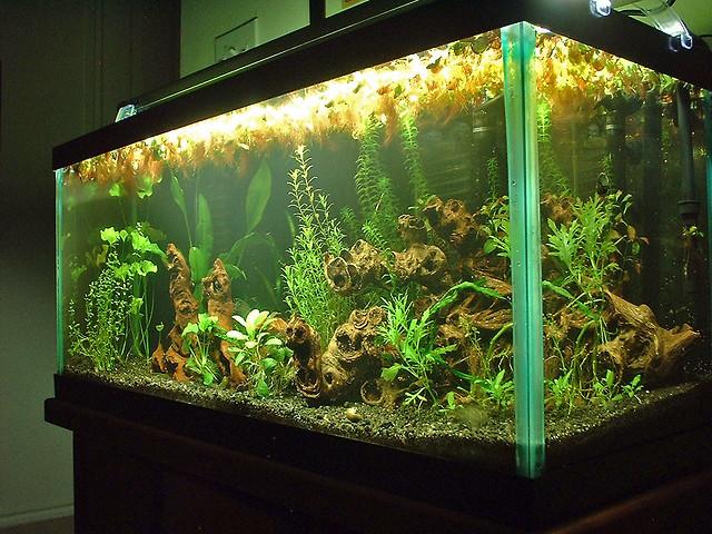 30 gallon planted aquarium a photo on flickriver for 30 gallon long fish tank