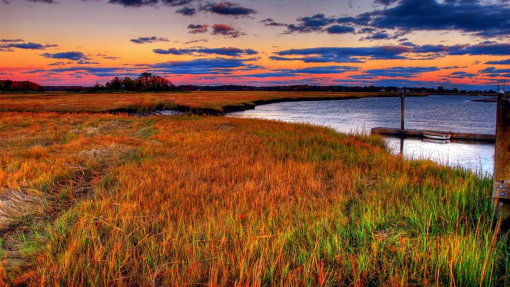 Salt marsh at East River estuary