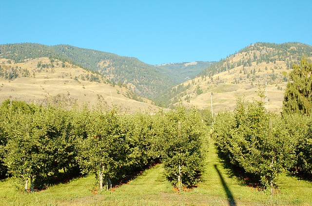 orchards_5163