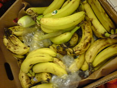 vegetable(0.0), summer squash(0.0), cooking plantain(0.0), plant(0.0), gourd(0.0), banana(1.0), yellow(1.0), produce(1.0), fruit(1.0), food(1.0),