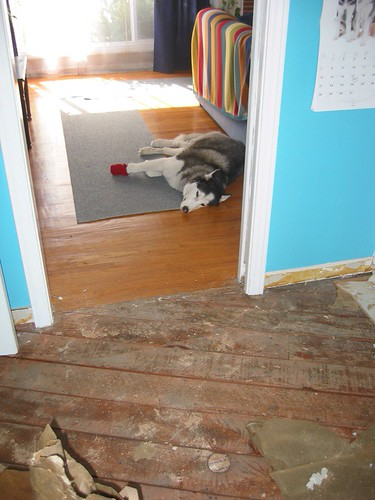 Grommit, home improvement dog