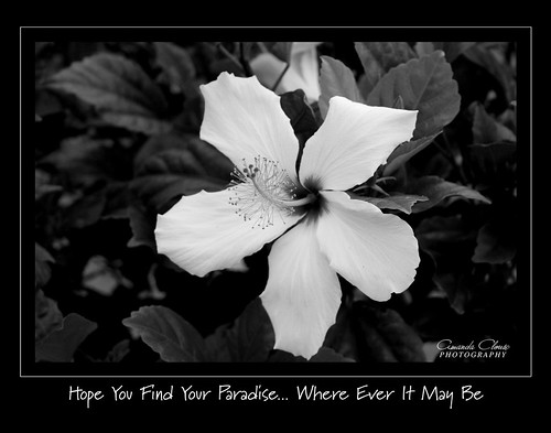 Where Ever It May Be - B&W