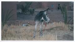 animal, mane, donkey, mammal, fauna,