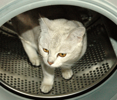 golden eyes in the tumble dryer