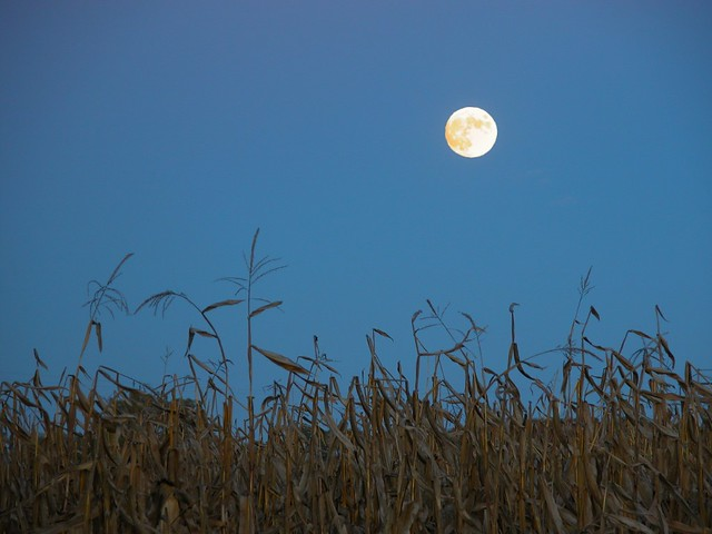blue corn moon flickr photo sharing