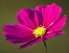nice pretty lovely flower