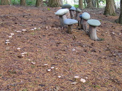 Fairy Ring by Earth Sanctuary
