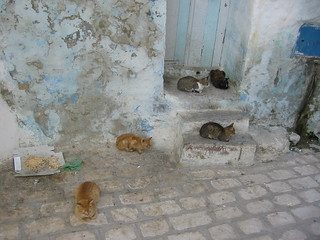Cats in the Medina, Sousse