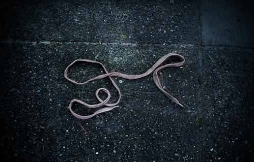 Organic Shoe String