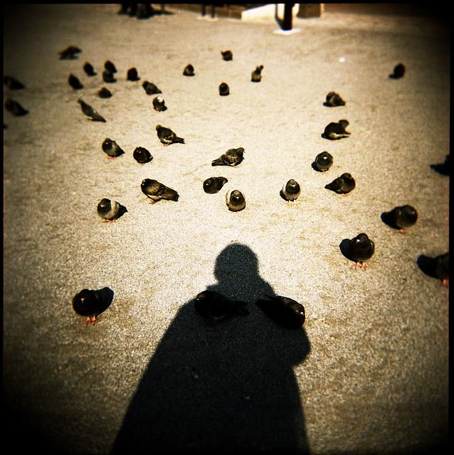 pigeonarium