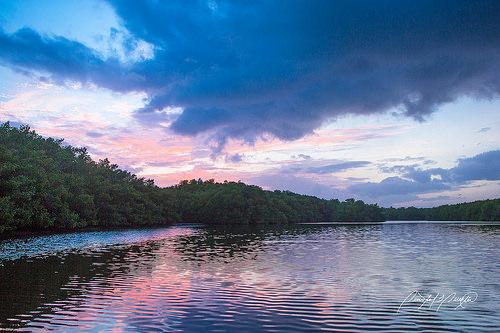 卡羅尼濕地,是千里達及托巴哥共和國國內最大的紅樹林濕地。圖片作者:Quinten Questel。圖片來源:https://www.flickr.com/photos/quintenquestel/17070100857/。本圖符合CC授權使用。