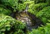 Royal Botanics-05641-FB