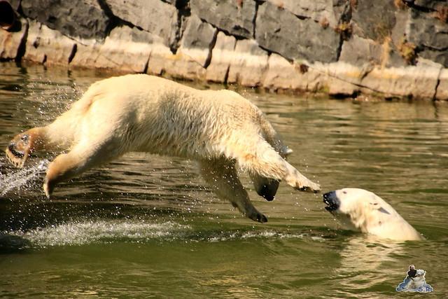 Tierpark Berlin 02.08.2015 0107