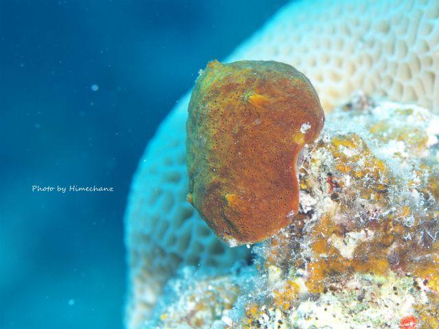 甲殻類にはとても見えないアフロ星人w
