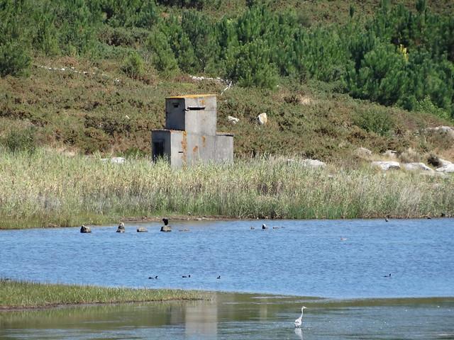 Observatorio de Aves en la laguna de As Xarfas