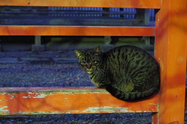Today's Cat@2017-01-20