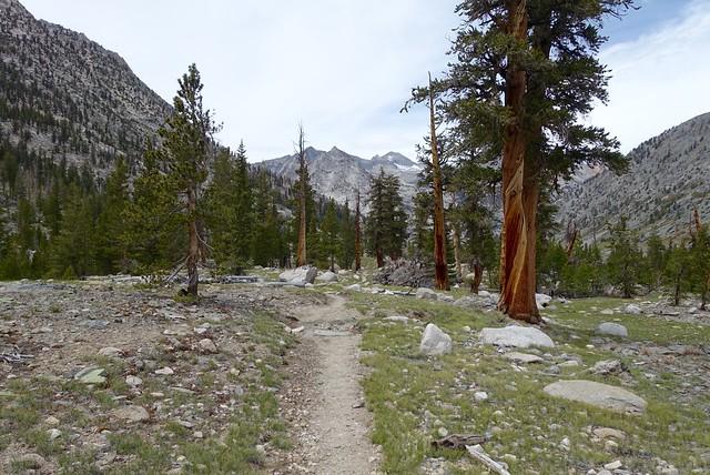 Trail, m797