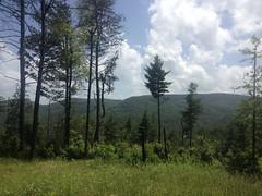 Locust Log Ridge