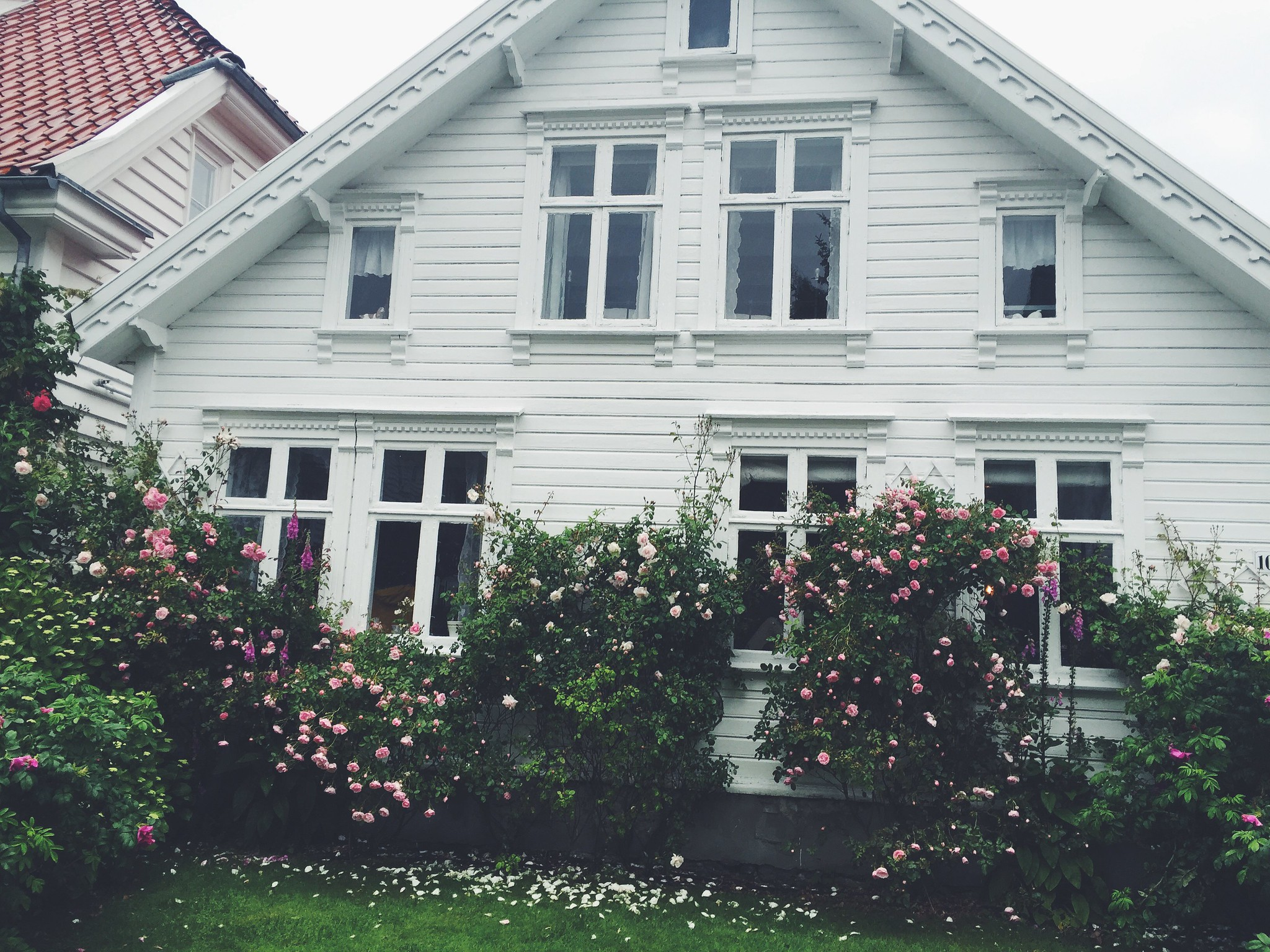 Blooms of Norway