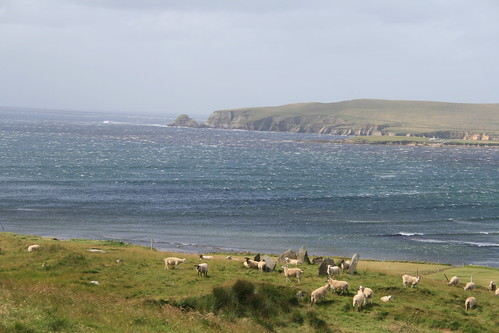 ireland sea view sheep countymayo stonecircle megalith dooncarton
