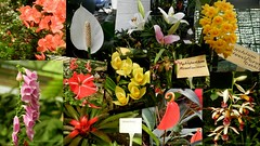 Flower exhibition Gangtok