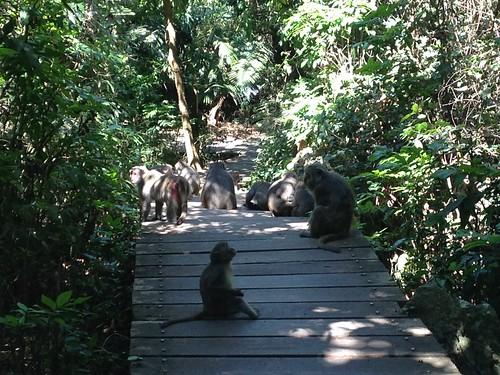和野生動物保持距離,人猴都安心。