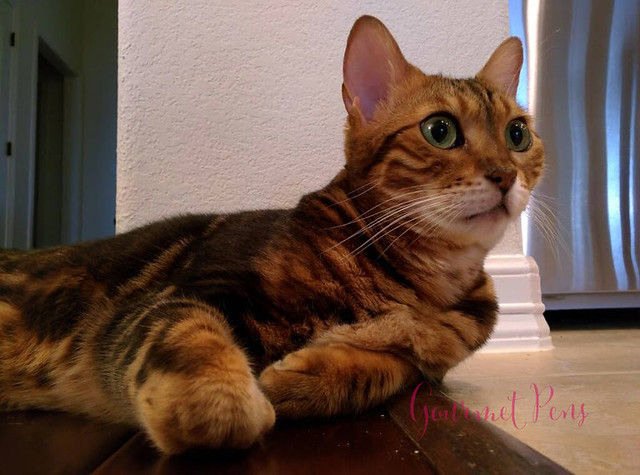 Whiskers & Paws February 2016 Edition (2)