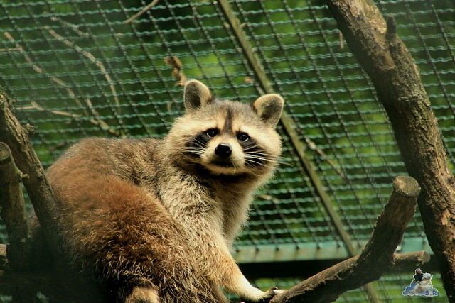 Tierpark Berlin 18.07.2015 090