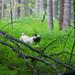 Bru's Adventures into the Woods