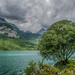 Tree on the Lake by lorenzapanizza