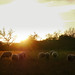 Evening mood - Landscape by PHOTOPHOB