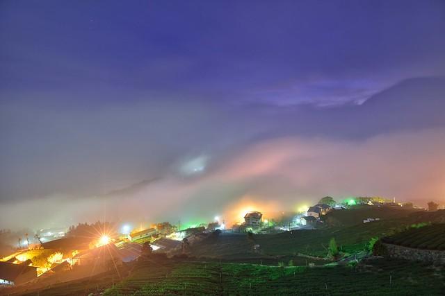 Misty at tea field