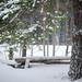 Snowy Tuesday by ballycroy