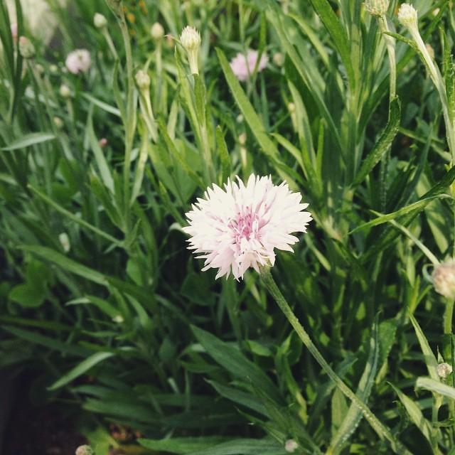 朝の草むしり、静かな時間