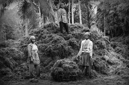 poverty travel blackandwhite travelling film analog asia time farmers kodak coconut colonial poor traveller backpacking jungle analogue division slavery bangladesh slaves bangla desh khulna travelphotography originalphotography