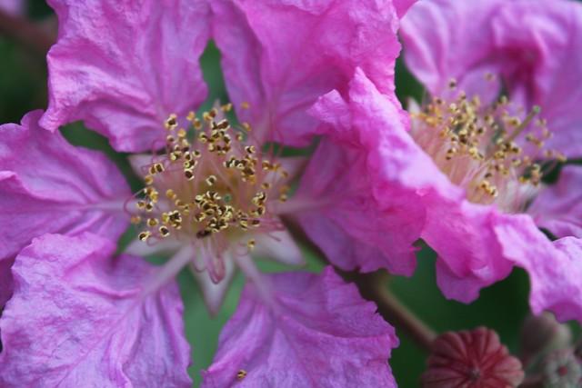 texture of petals