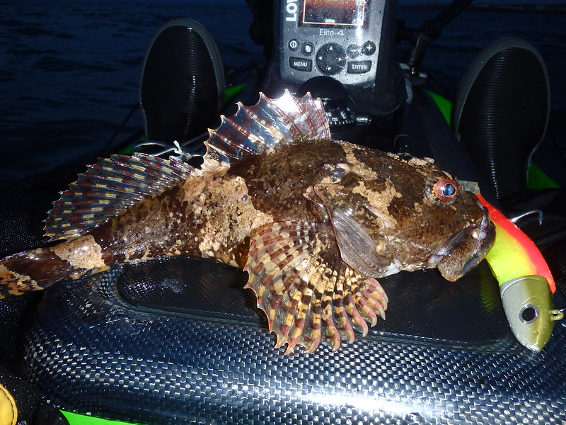 Kayak Fishing Scorpion Fish
