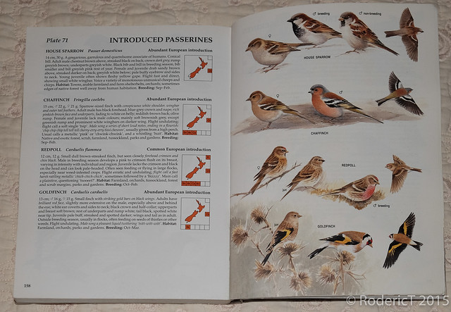 20150715-DSCF8687 Goldfinch Page Penguin The Hand Guide To The Birds Of New Zealand.jpg