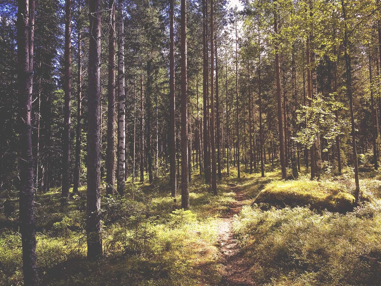 Hälsingeleden www.traningsgladje.se
