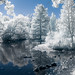 Portage Creek in Milham Park - infrared by bill.d