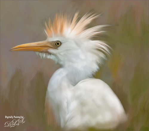Image of a Cattle Egret using GREYCstoration plug-in
