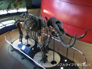 人と自然の博物館アメリカマストドン