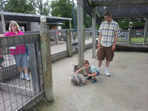 Petting the Goats