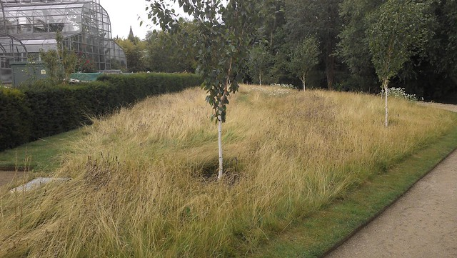 "Grass border with Betula utilis var. Jacquemontii ""Silver Shadow"""