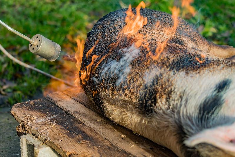 Fotos de animales de todo tipo incluyendo mascotas que más te gustan - Página 6 30752326394_66510f2b58_c