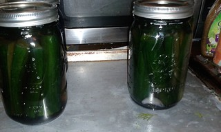 A second batch of dill sour pickles. Better in quart jars. And this time instead of a little bit of black tea, a whole tea bag to each jar.