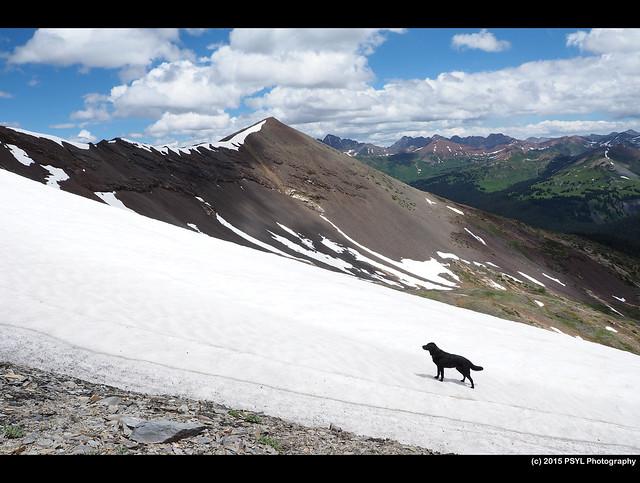 Black dog against white snow